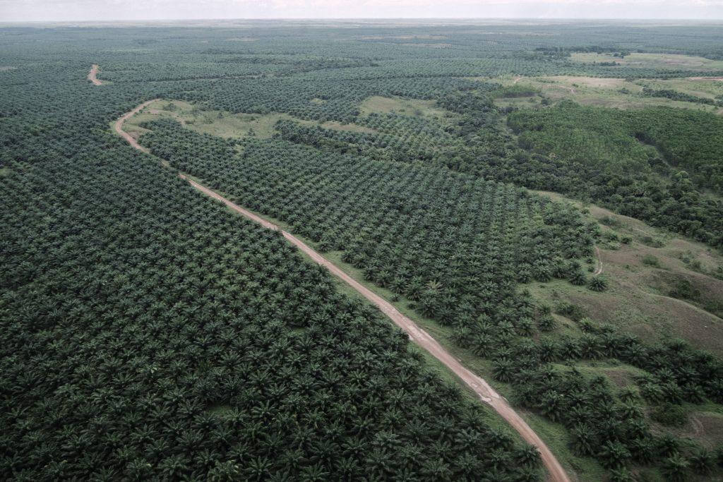 Plantație de palmier în Columbia, al patrulea cel mai mare producător de ulei de palmier din lume. Credi foto: Mihai Stoica pentru T&E/2C