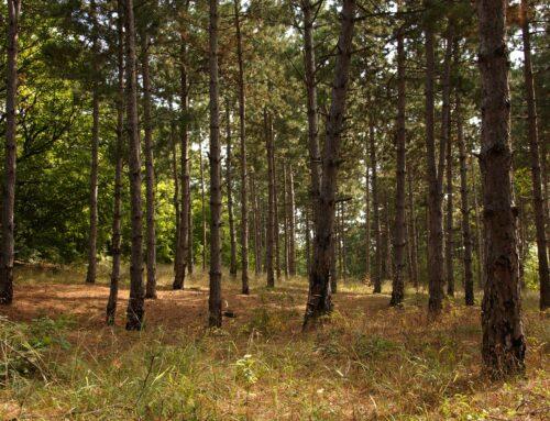 Scrisoare deschisă pentru scoaterea silviculturii și bioenergiei din legislația europeană privind taxonomia climatică